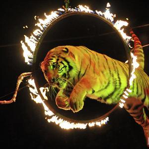 Цирки Биазы