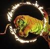 Цирки в Биазе