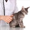 Ветеринарные клиники в Биазе